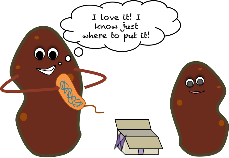 Naturally GMO, the sweet potato way