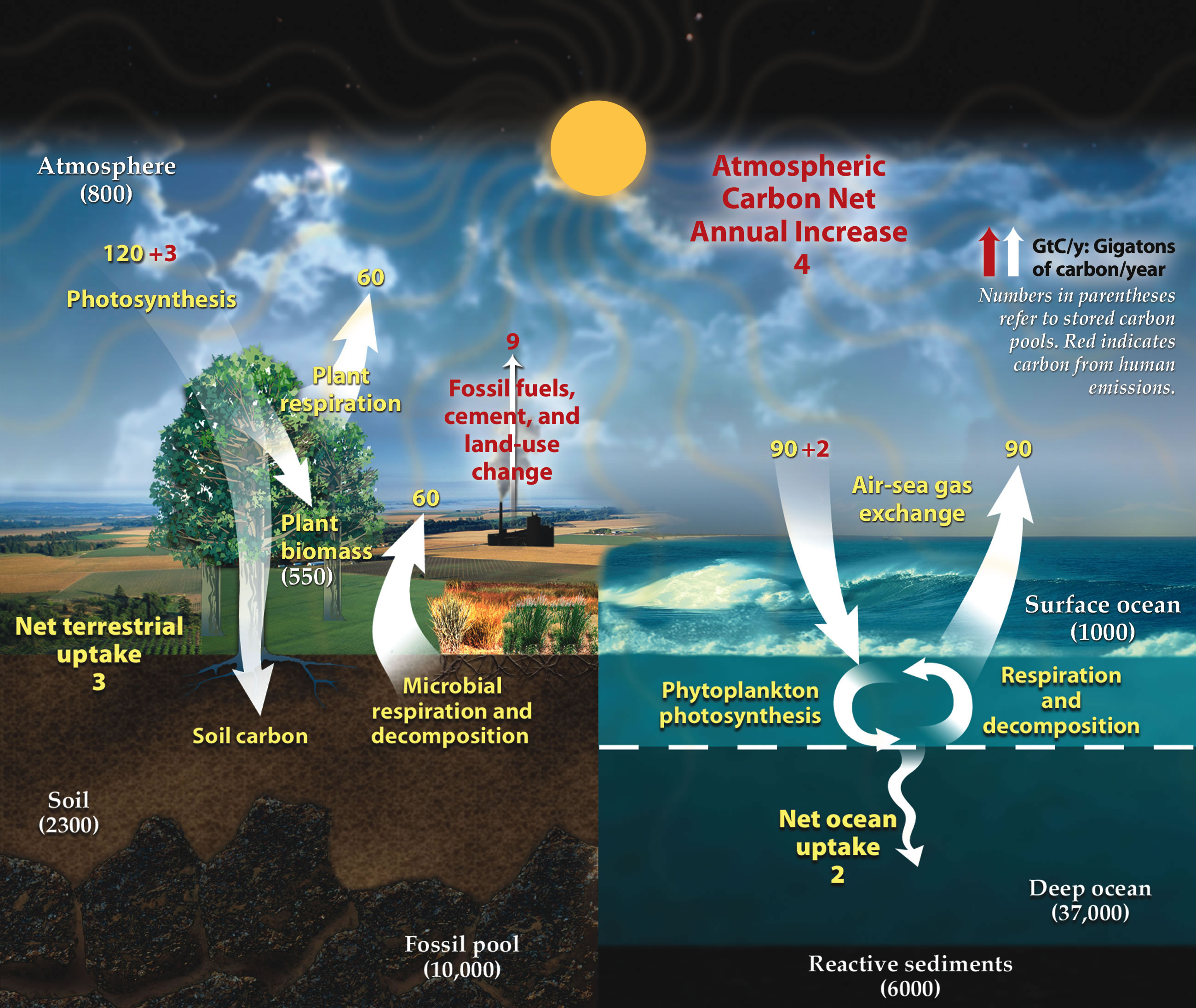 "Cartoon of Earth's Carbon Cycles. Courtesy of <em>Climate Placemat: Energy-Climate Nexus</em>, US Department of Energy Office of Science. (p.1)(<a href=""http://www.berscience.org/posters/index.shtml"" target=""_blank"">website</a>)"