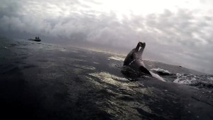 Source: Vimeo uploaded by Angie Gullan's Dolphin Center