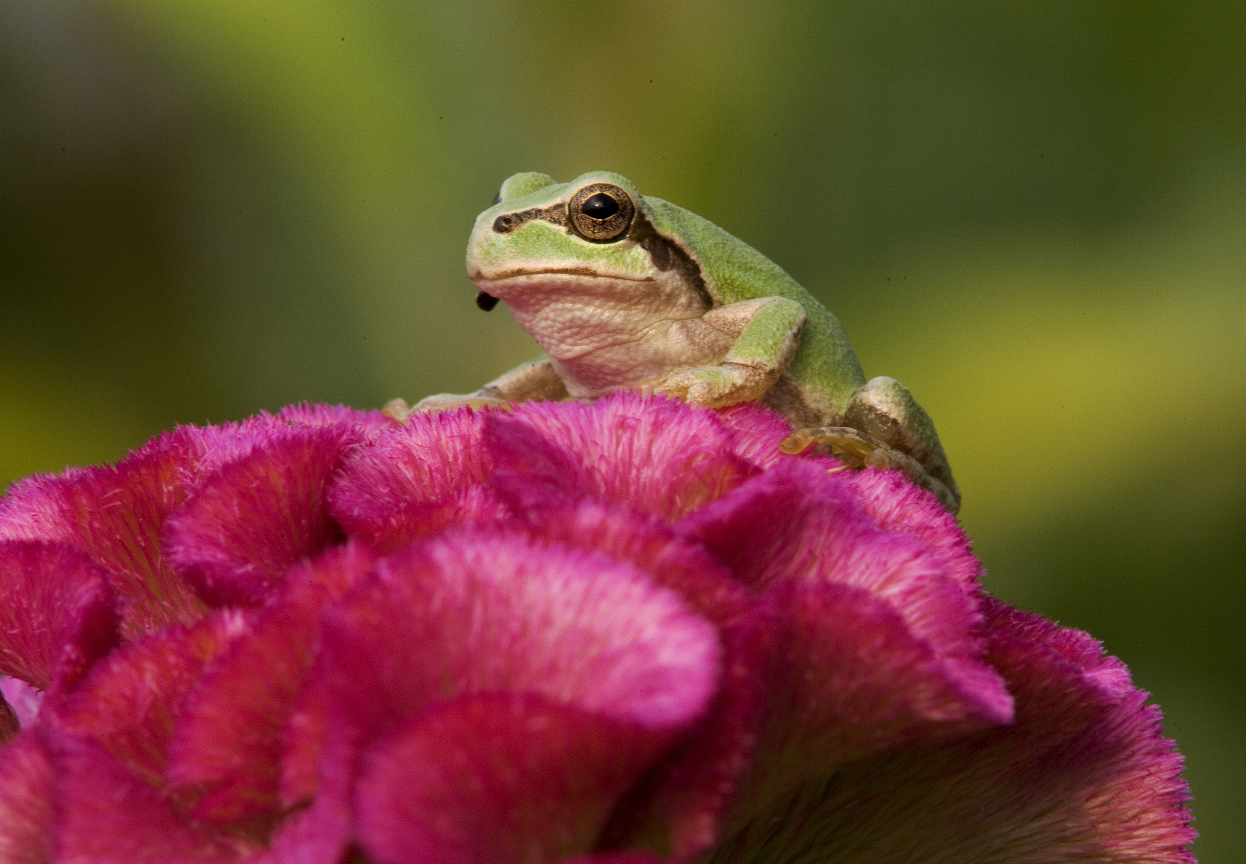 Horny Frogs and the Fungal Love Potion