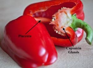 https://pixabay.com/en/paprika-fruit-vitamins-eating-716909/