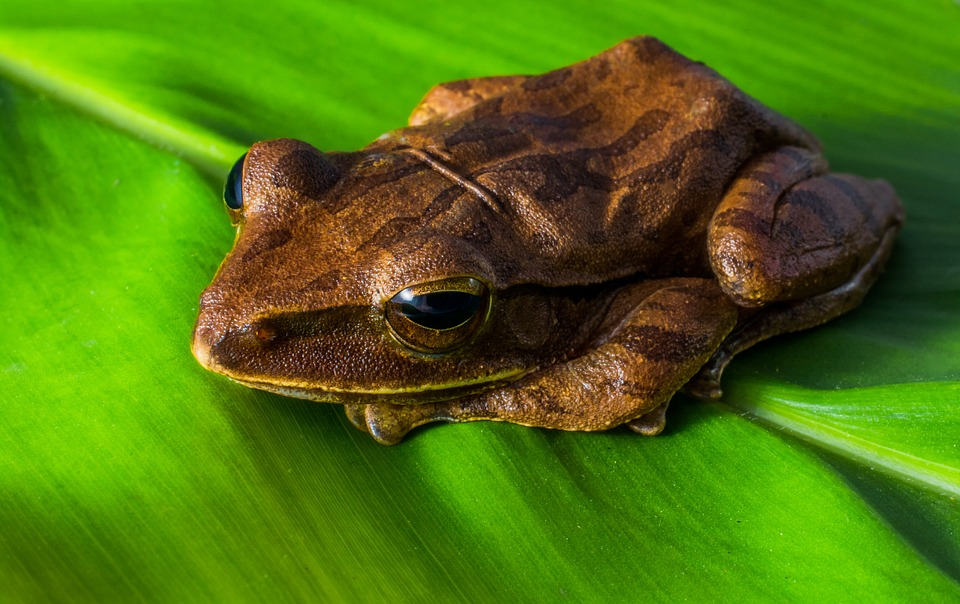 Frog Slime: The Secret to Kicking that Awful Flu