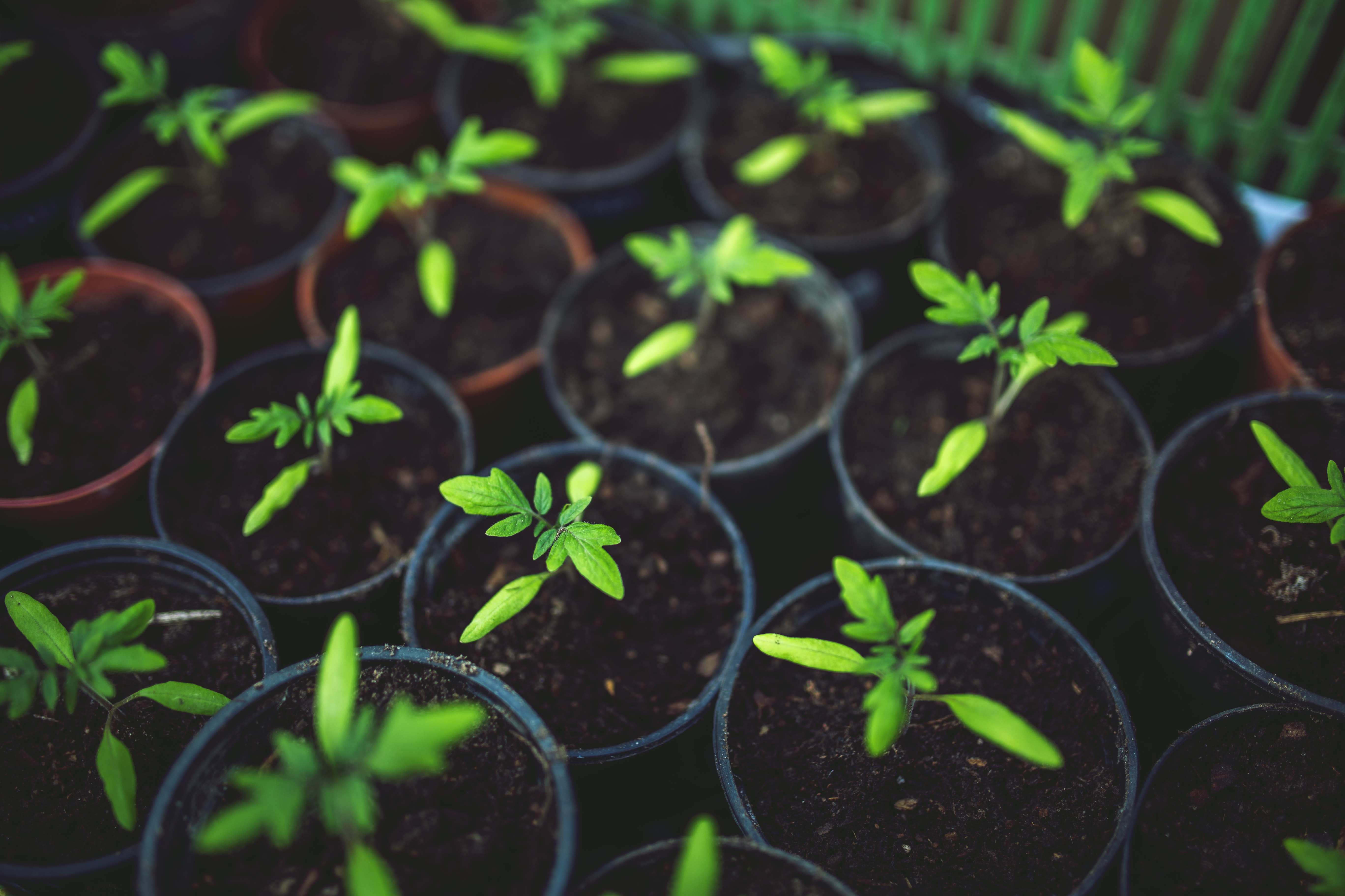 CRISPR-edited Plants and Regulation