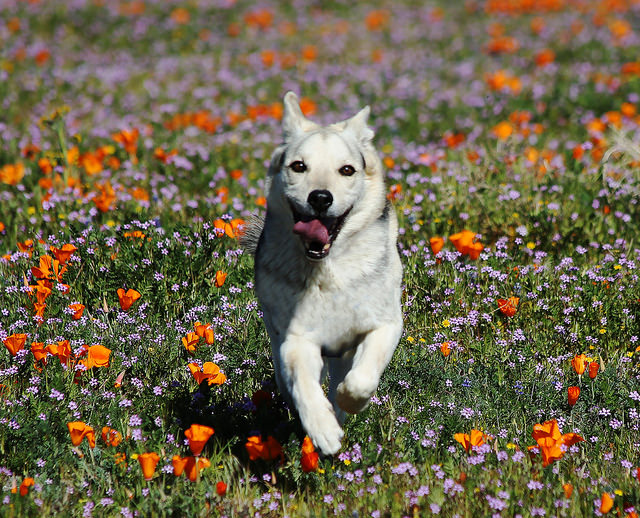 Will dogs save us from allergies?