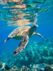 https://www.maxpixel.net/Sea-Turtle-Is-Animals-2547084