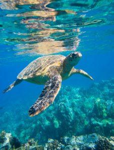 https://www.maxpixel.net/Sea-Turtle-Is-Animals-2547084