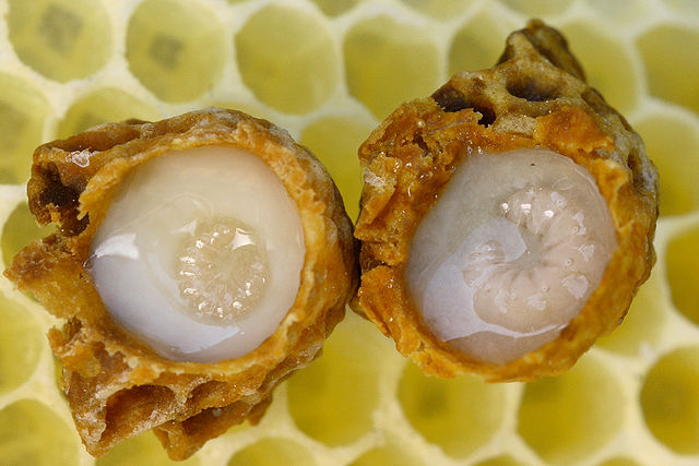 Ready for this (royal) jelly: A personal report of succumbing to epigenetic hype