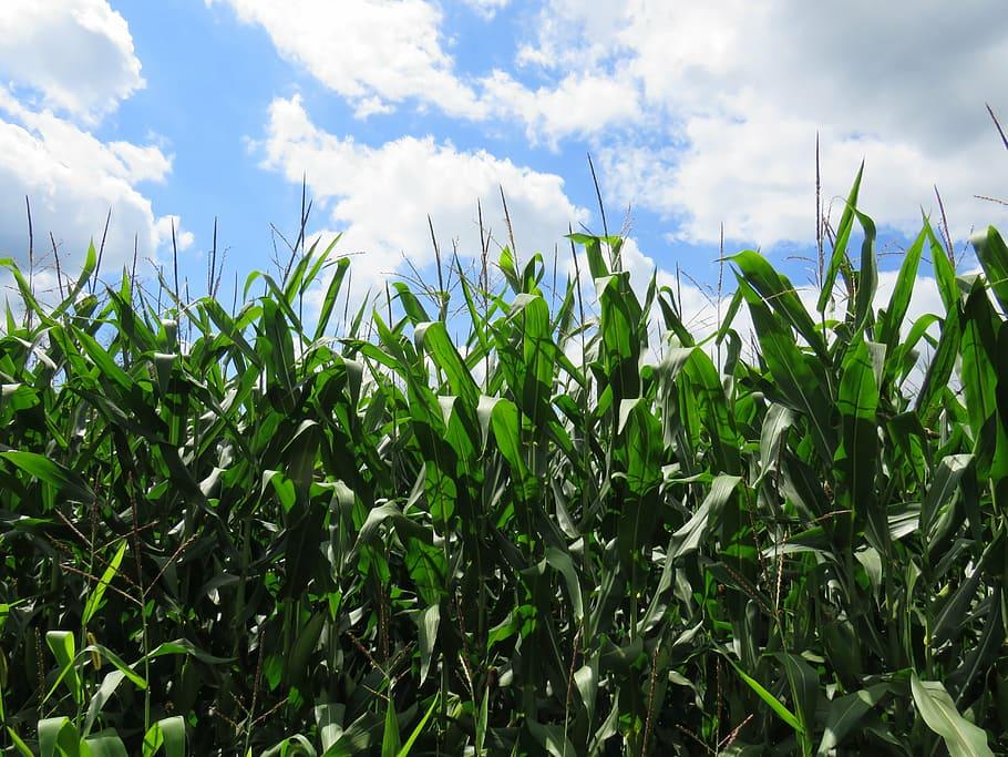 pxfuel.com afforded this image