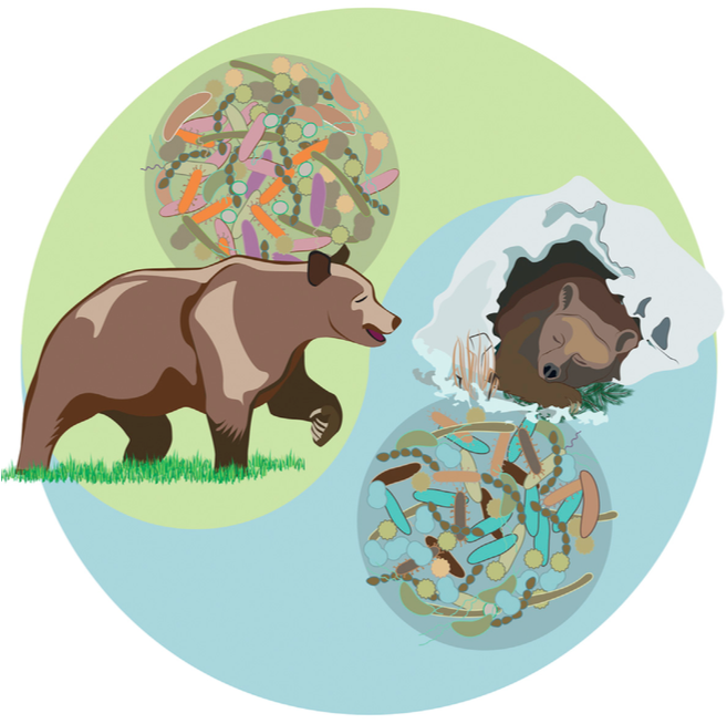The Amazing Microbiota of Brown Bears